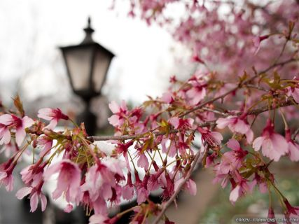 Early Springtime Wallpaper Images Free Download
