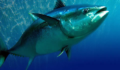 High efficiency heating equipment for What does a tuna fish look like